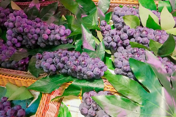 葡萄什么品种的好吃,市场上最贵的葡萄是啥?