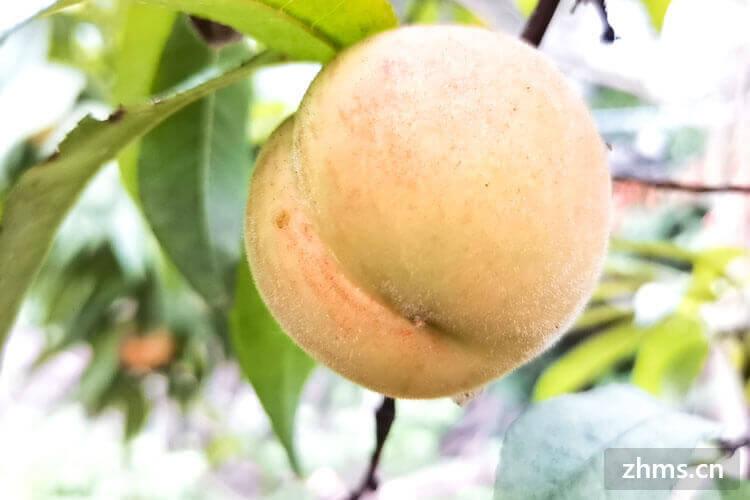 桃子和葡萄是什么季节的水果