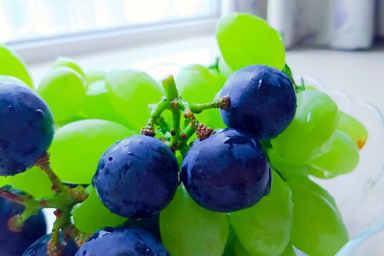 新疆的山葡萄特别有名,山葡萄品种介绍?