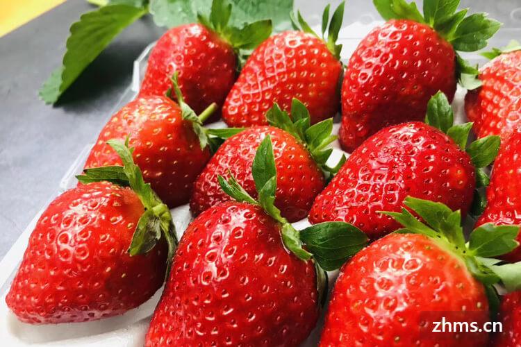 西山几月可以采草莓
