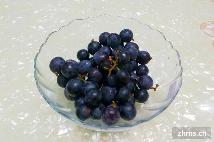山葡萄品种有哪些
