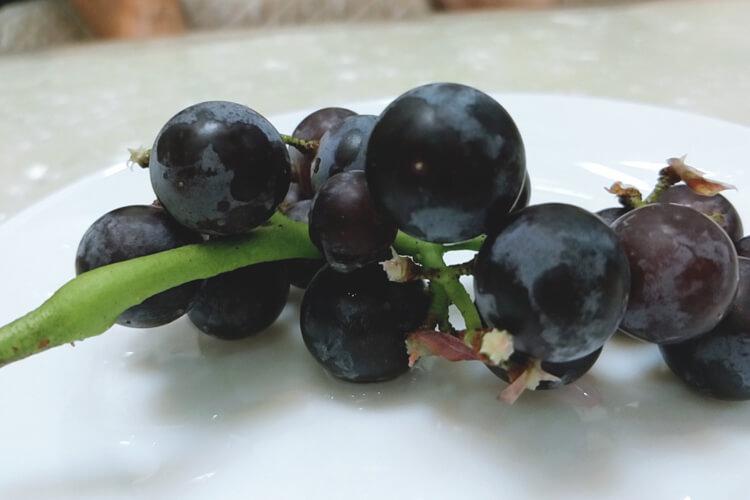 感觉葡萄跟提子看起来差不多,请问葡萄跟提子一样吗?