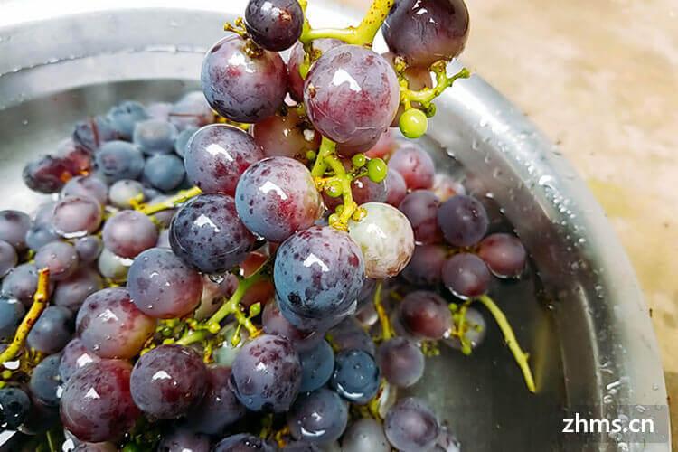 葡萄有些什么品种