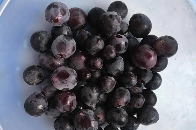 葡萄的品种有青葡萄和紫葡萄,那青葡萄和紫葡萄哪个好呢?