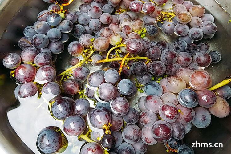 山葡萄是葡萄吗