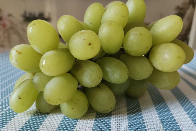 山葡萄品种那种好吃?想买山葡萄