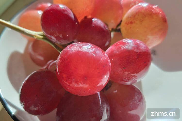 葡萄和提子是一个季节的吗