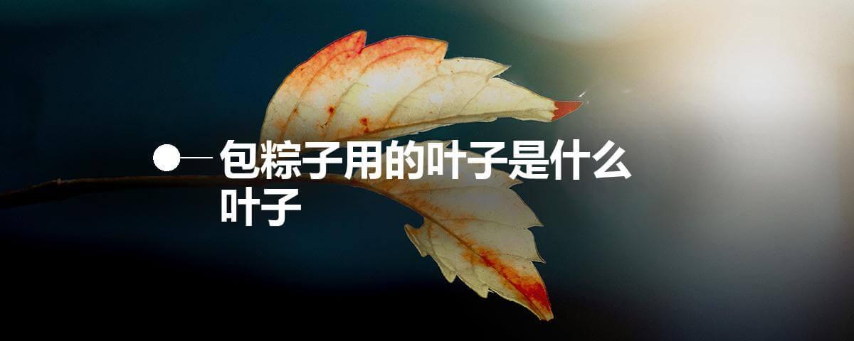 包粽子用的叶子是什么叶子