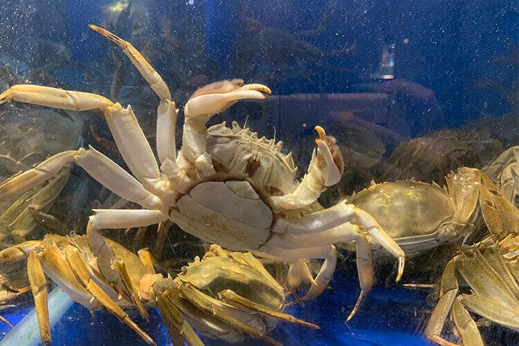 家里的人平时比较喜欢吃梭子蟹,叉子三角螃蟹是梭子蟹吗?