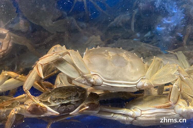 重阳节吃螃蟹的寓意是什么