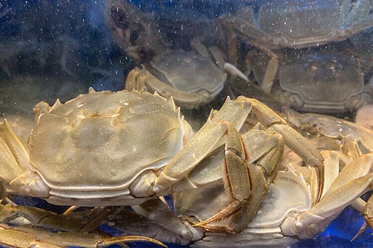 从没有蒸螃蟹的经验,请问切块大面包蟹蒸多久才会熟了?
