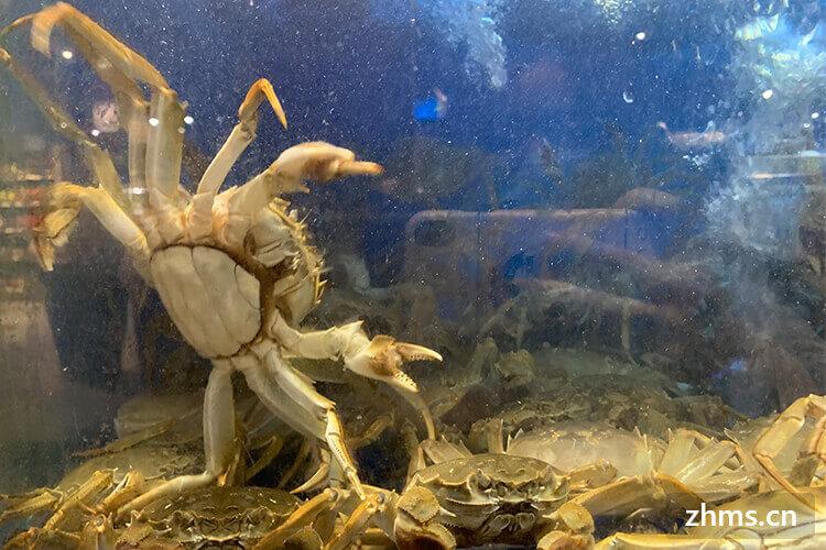 秋天怎么选螃蟹