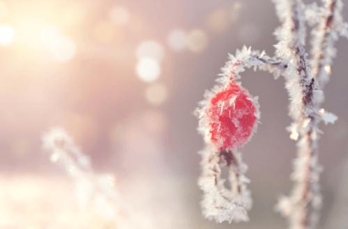 冬季护眼 建议了解叶黄素的功效和作用!