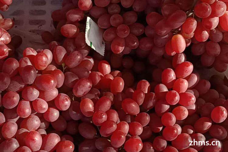 葡萄什么时候成熟