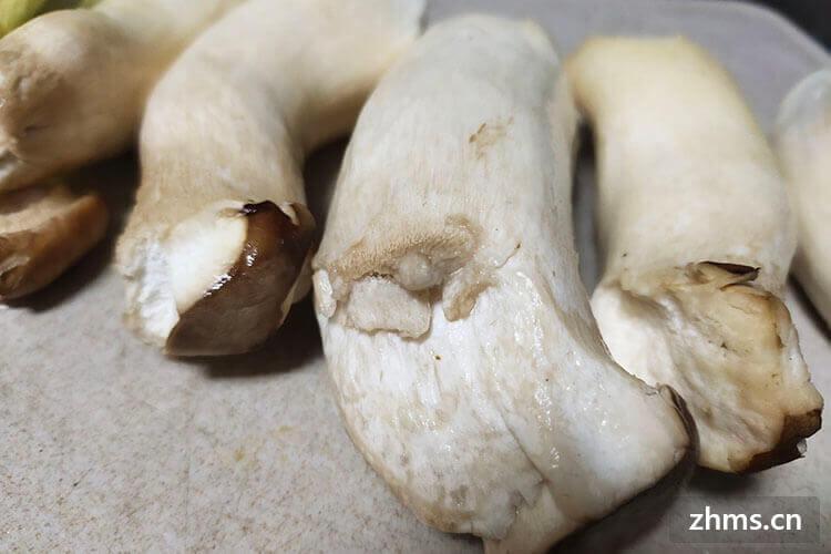 鸡腿蘑是什么样的
