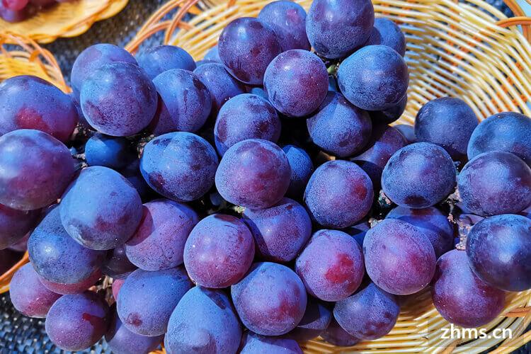 葡萄上市季节是什么时候