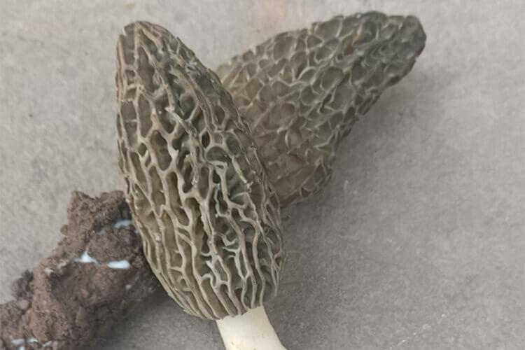 打算做蘑菇,蘑菇素炒怎么炒好吃?