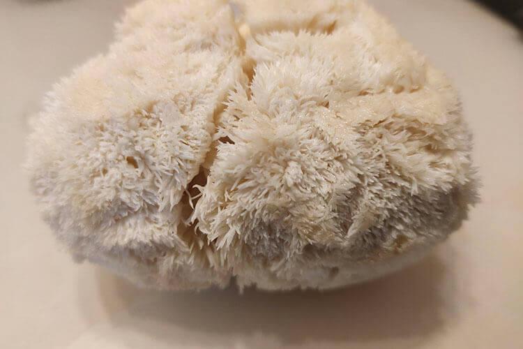 买了一点虫草花,猴头菇虫草花炖乌鸡汤怎么做?