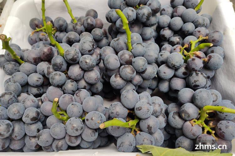 无籽夏黑是葡萄还是提子