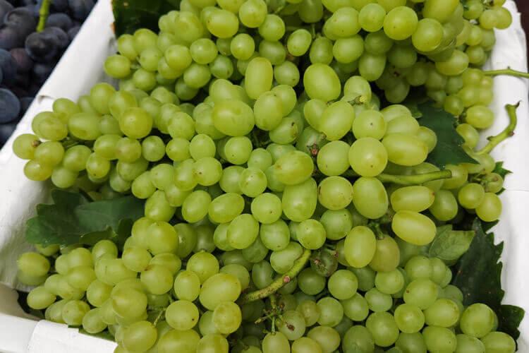 提子和葡萄一样吗?怎么它们的价格不一样呢?
