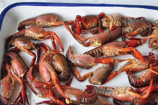 靓靓蒸虾——夏天一定要吃的小龙虾第二步
