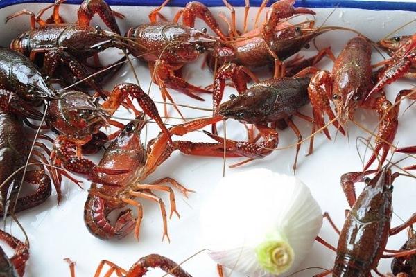 靓靓蒸虾——夏天一定要吃的小龙虾第一步