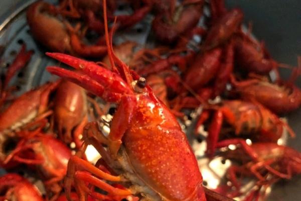 清蒸小龙虾,香香浓浓好鲜美第三步