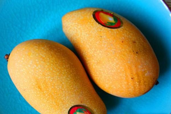 紫米椰香芒果球,吃一颗甜到心里~第三步