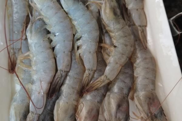 冬菇虾粥美味又营养第一步