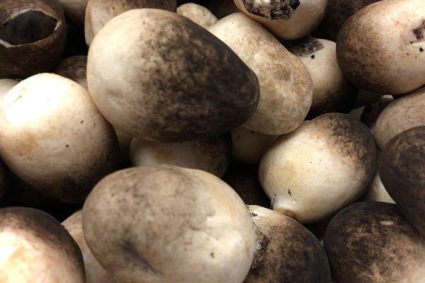 草菇炒肉,一款高营养食品第二步