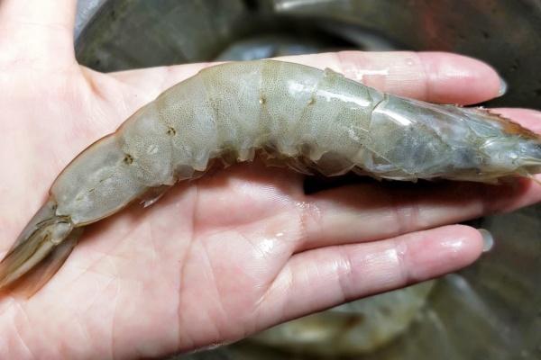 芒果虾仁莴苣沙拉健康低脂好美味第七步